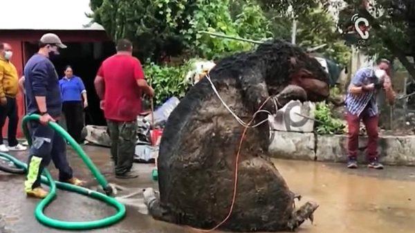 giant rat trap